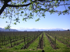 De Martino Vineyard, Chilean