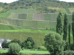 A Patchwork of Vineyards along the Mosel River